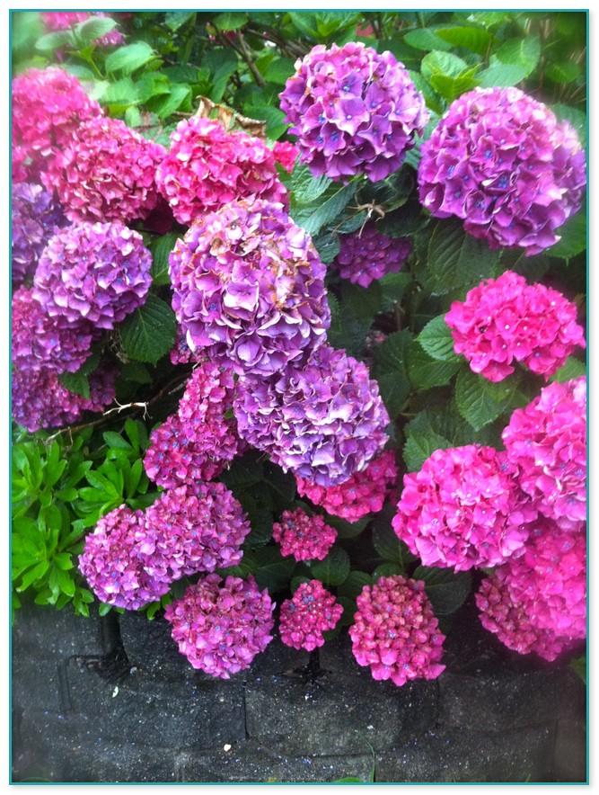 all year round flowering plants australia