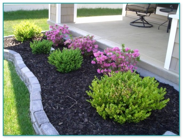 cheap plants landscaping