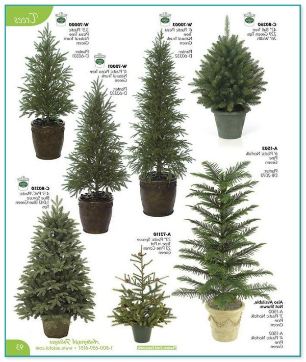 dwarf evergreen trees landscaping