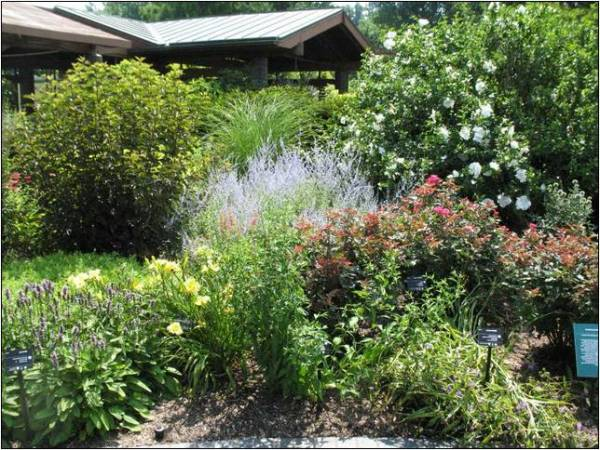popular plants landscaping