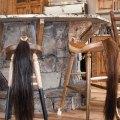 Western home journal talks to hank adams owner of buckeye hardwood