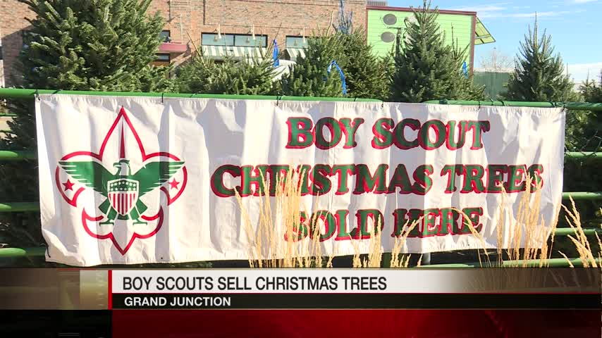 Boy Scouts Sell Christmas Trees to Fund Activities_25323865
