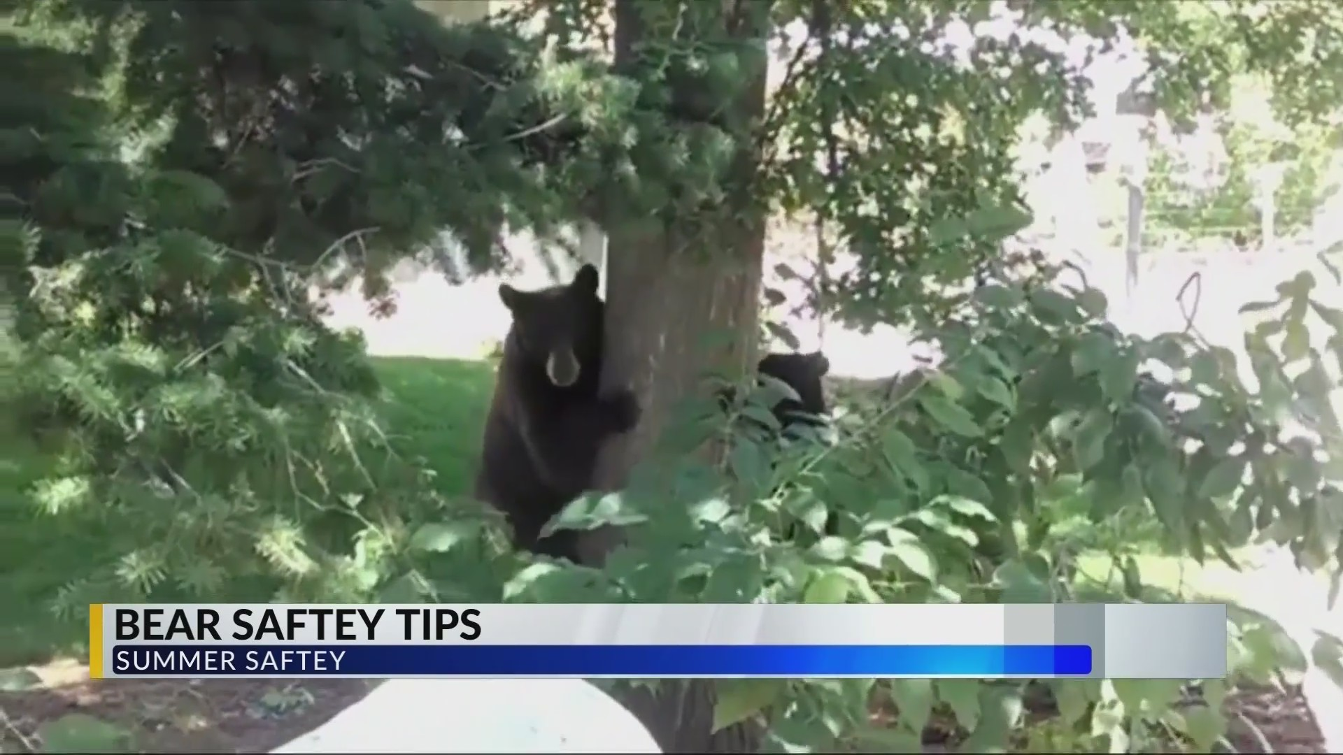 Bear Saftey Tips