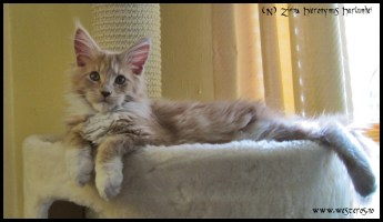 Hieronymus 4 months old