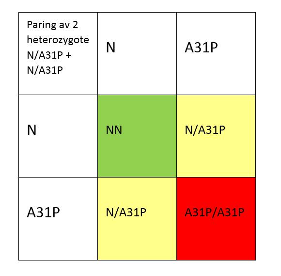 Kombinasjon av to heterozygote katter og egenskap som er dominant med variabel penetrans, slik som HCM-mutasjonen A31P.