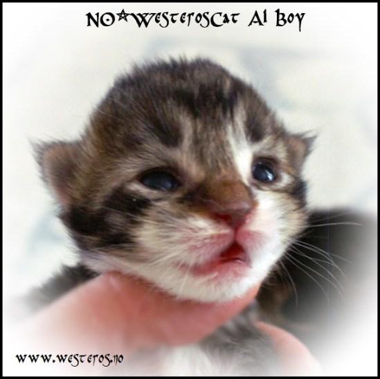 Alaric 9 days old
