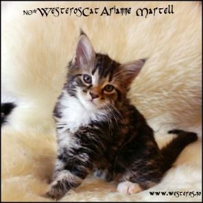 Arianne 7 weeks
