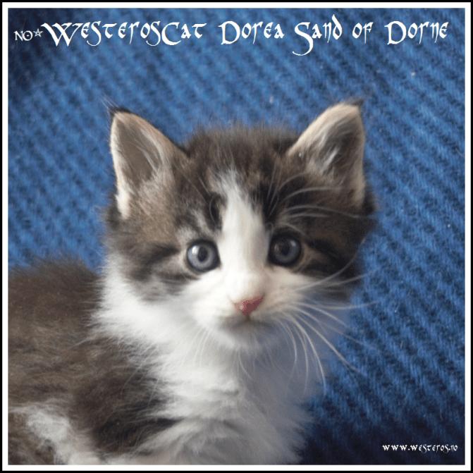 Dorea 5,5 weeks old