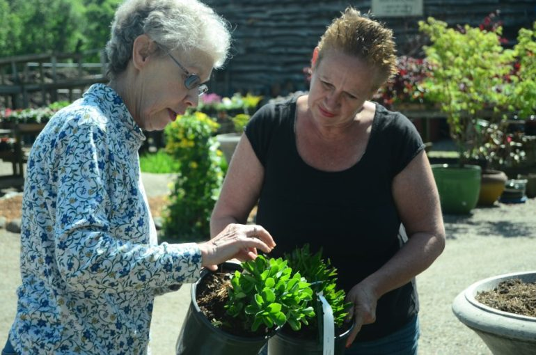 CNS Mustard Seed owner Nancy Morton (right) helps Barbara Bates with a purchase during the business' opening weekend.