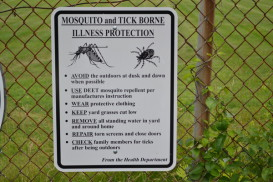 (W) Mosquito