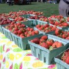 Freshly picked strawberries are  on display at the Farmers Market on June 20. PHOTO BY PATTY STOCKER