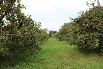 Hill Orchard occupies about 23 acres along Chamberlain and Hunt Roads. PHOTO BY JOYCE PELLINO CRANE