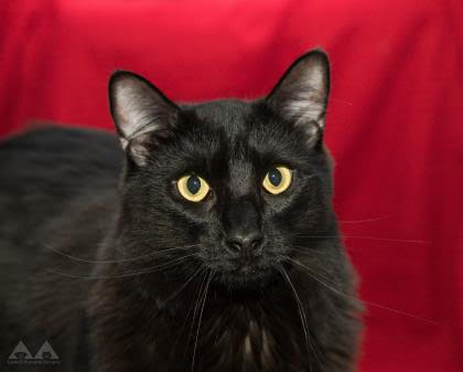 Hashtag is available for adoption. PHOTO BY PATTY STOCKER