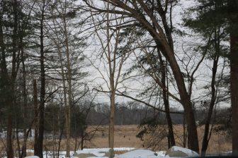 Marshland behind residential homes on Drew Crossing. PHOTO BY JOYCE PELLINO CRANE