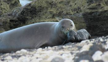 DLNR: Please don't feed the seals