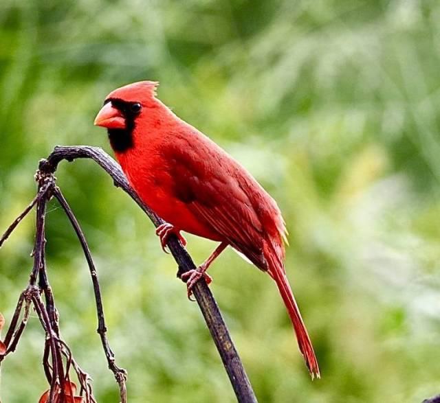 Island Life: Pretty bird