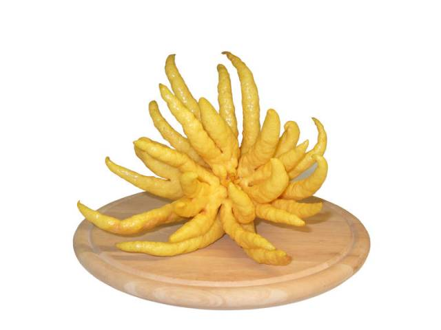 A beautiful tart to showcase the scariest of fruits