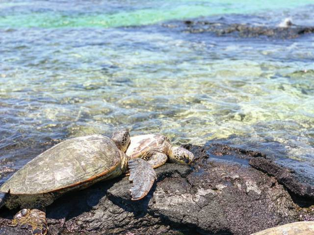 Island Life: On the rocks