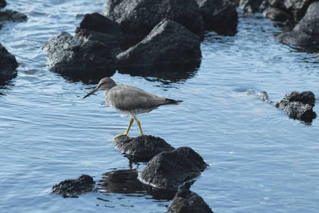 Island Life: A tattler's tale