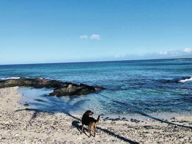 Island Life: Walkies!