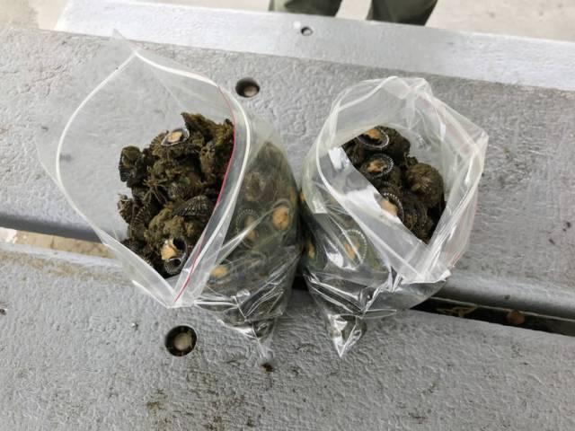Man in Hilo fined for undersized 'opihi harvest