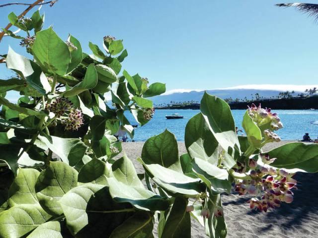 Island Life: A royal welcome