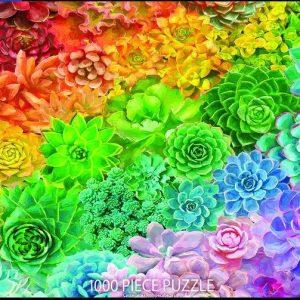 Succulent Rainbow 1000 pc.