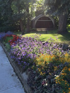Little Avenue Memorial Park looking beautiful this week.