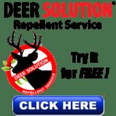 Deer Repellent Service - Protect your landscape from Deer Damage