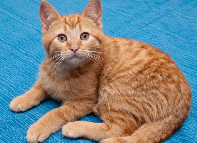orange tabby cat frankie