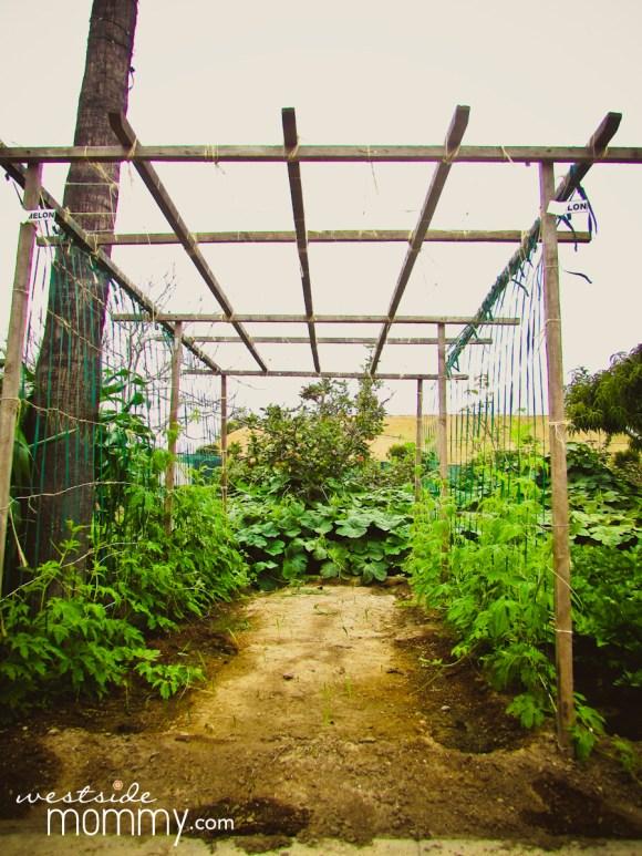 plants at Centennial Farm