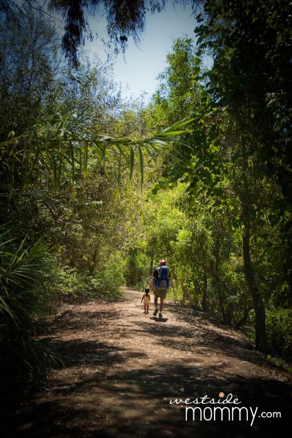 FranklinCanyon_hike_trees
