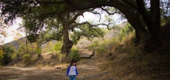 Check out the cool trees on Solstice Canyon Trail in Malibu