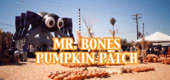 Tips for Visiting Mr. Bones Pumpkin Patch in Culver City