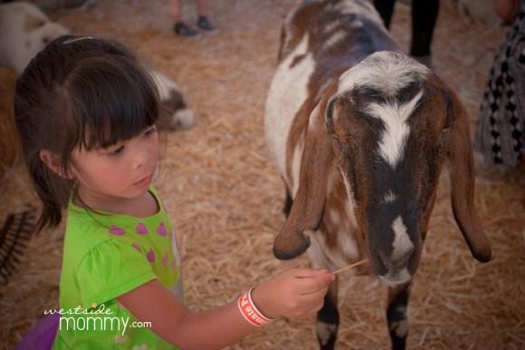 wsm_mrbones_pettingfarm