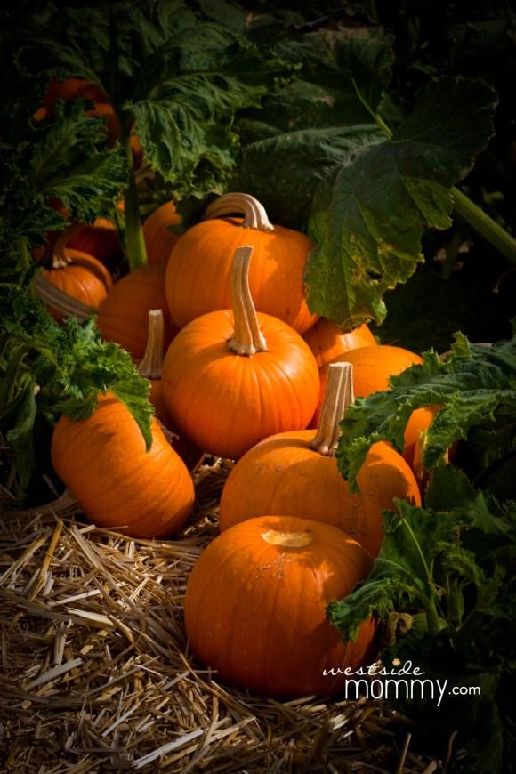 wsm_underwood2016_pumpkins