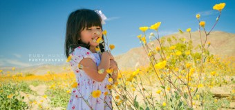 Tips for seeing the Wildflowers at Anza-Borrego (Borrego Springs)