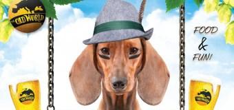 Dachshund wiener-dog Races at Old World Huntington Beach