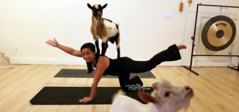 Goat Yoga at Laughing Frog Yoga Los Angeles