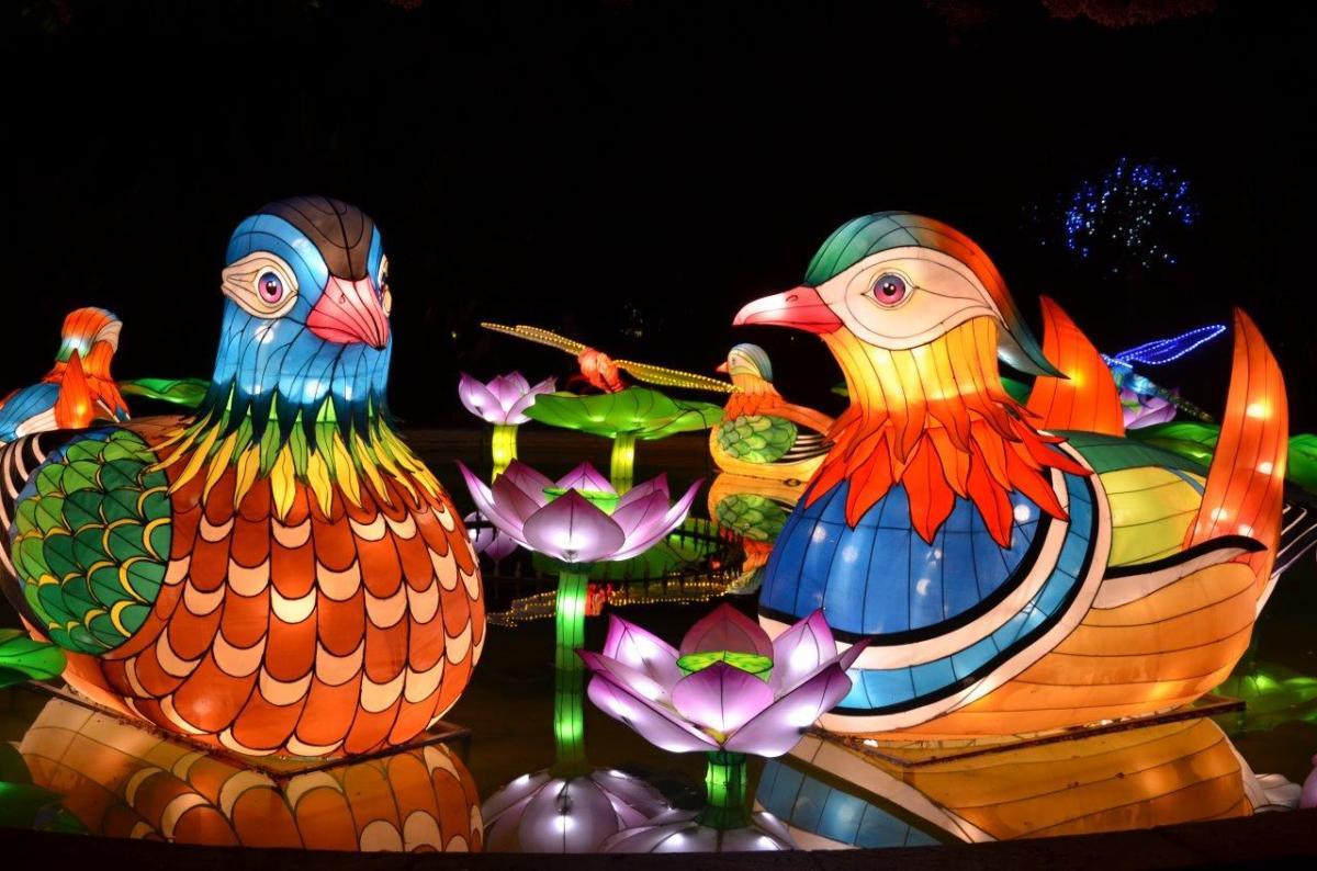 The Chinese Lantern Festival Will Light up the Night in Pomona Nov. 15 - Jan 6th