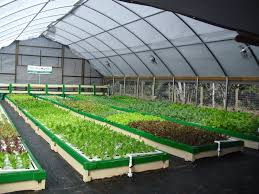 Aquaponics 101 - Styles and Types Commercial Raft Deep Water Culture System