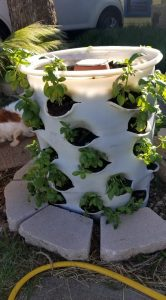 Garden Grow Towers with newly planted basil