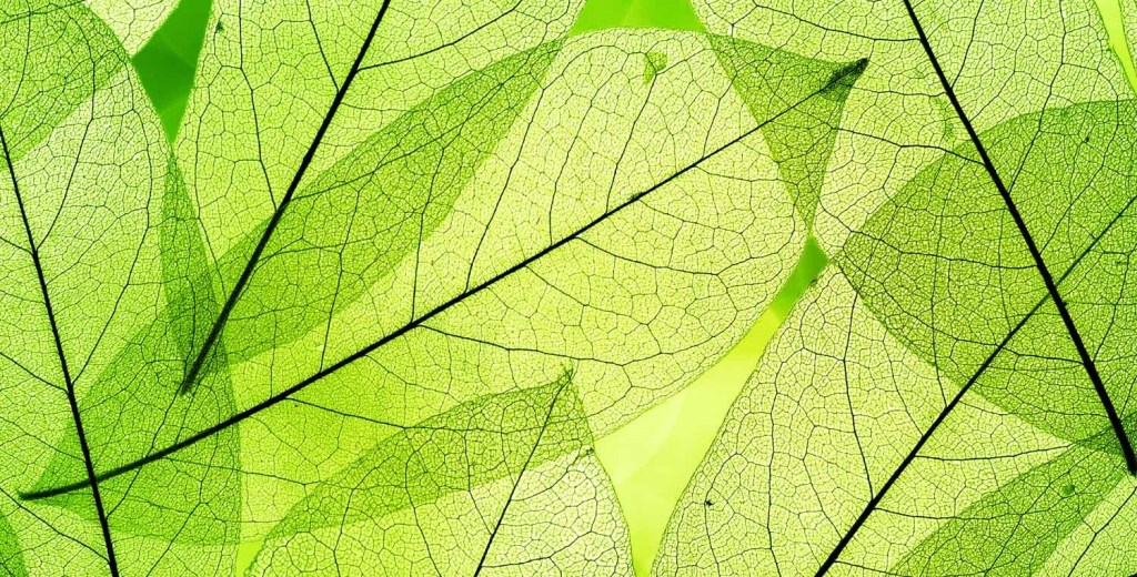 quantum physics in the garden  - leaf structure