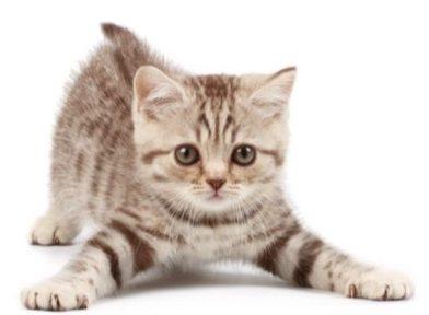 cats kittens 500 1 e1519002415436 - West Toowoomba Veterinary Surgery