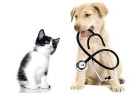 pet insurance - Pet Insurance
