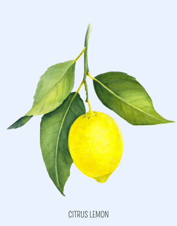 Simple Citrus lemon free art print looks gorgeous in a frame on your wall! Available in two popular sizes. Grab your free lemon printable today! | We Three Shanes