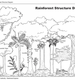 rainforest structure diagram photographer wtma [ 1142 x 807 Pixel ]