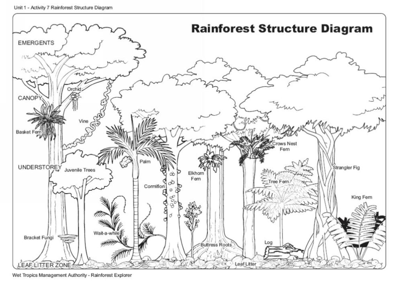 diagram of a tropical forest apple airport rainforest structure wet tropics management authority photographer wtma