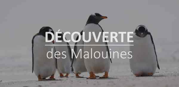 Découverte des Malouines - Cover
