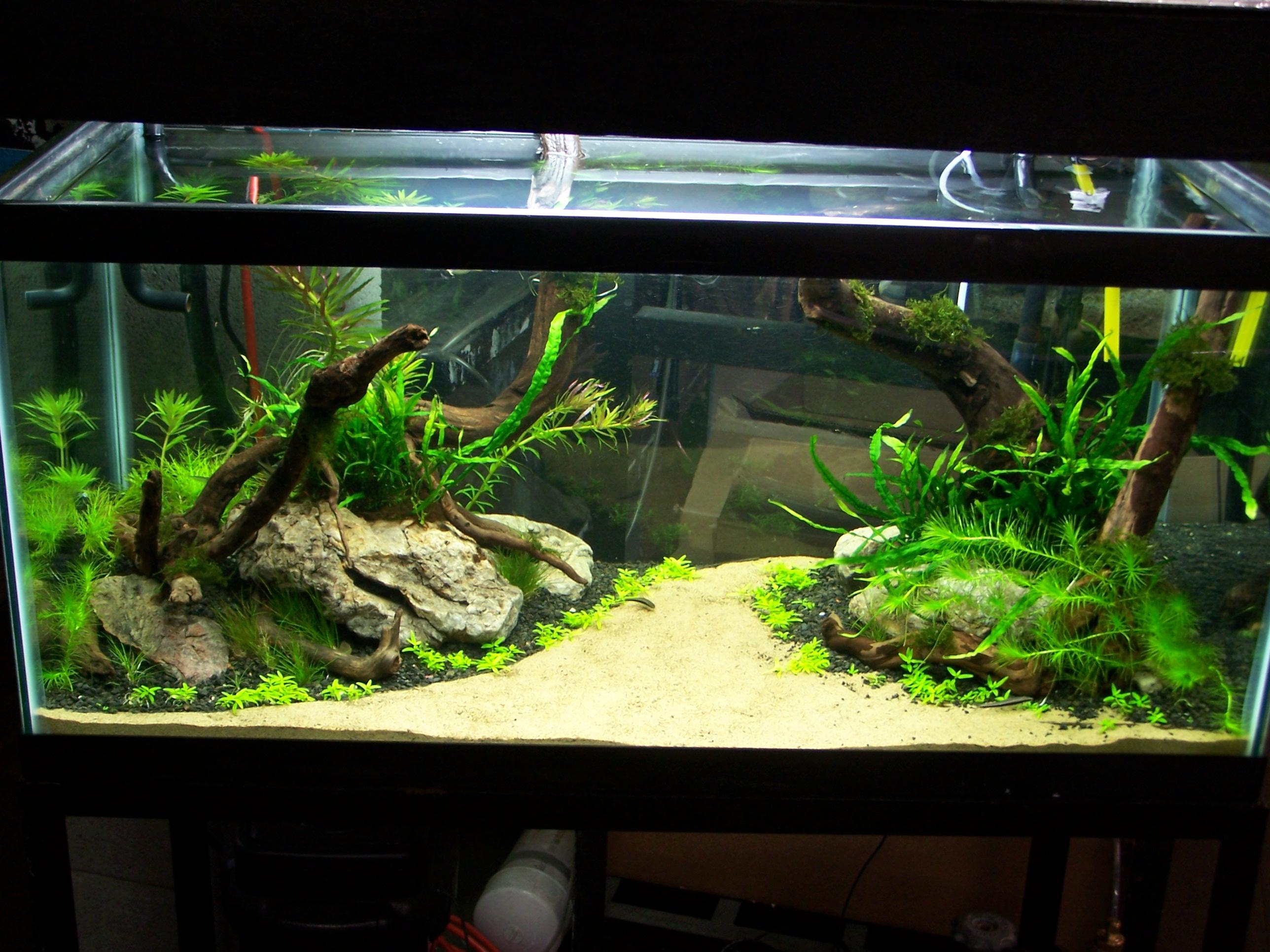 1000+ images about Aquariums! on Pinterest